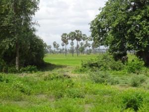 DSC01513(農村)